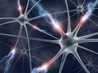 neural cells